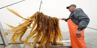 Οι καλλιεργητές της θάλασσας, Δημήτρης Σκουτέρης