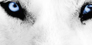 """Η κοινωνική πίτα και οι """"λύκοι"""", Κώστας Μελάς"""