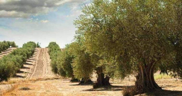 Η κυκλική οικονομία, οι πυρκαγιές και τα αγροτικά απορρίμματα, Δημήτρης Σκουτέρης