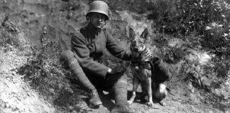 Η επιστράτευση ζώων στον Α' Παγκόσμιο Πόλεμο