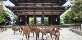 Τα ελάφια του μεγαλύτερο ξύλινου ναού στον κόσμο