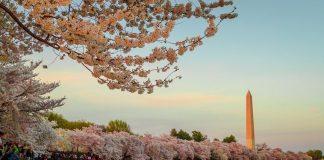 Οι κερασιές της Ουάσινγκτον υποδέχονται την άνοιξη