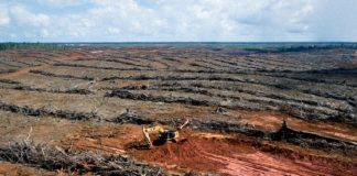 Τεράστια οικολογική καταστροφή στα δάση της Παπούα