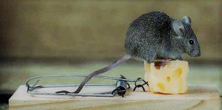 Κάποιοι βλέπουν το τυρί, αλλά αγνοούν τη φάκα, Δημήτρης Χρήστου