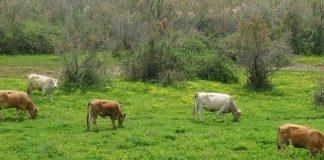 Πρωτομαγιά στο δέλτα του Έβρου – Οι άνθρωποι, ο φράχτης και το τοπίο, Μελαχροινή Μαρτίδου