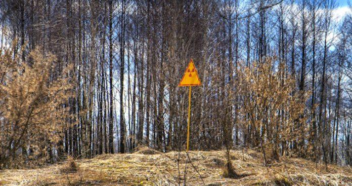 Το τρομακτικό μυστικό που κρύβουν τα δάση του Τσέρνομπιλ