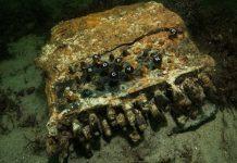 Σπάνια μηχανή Enigma των Ναζί – Από το βυθό της Βαλτικής σε μουσείο