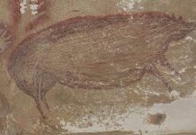 """Στο """"φως"""" οι αρχαιότερες σπηλαιογραφίες στον κόσμο (φωτό κ βίντεο)"""