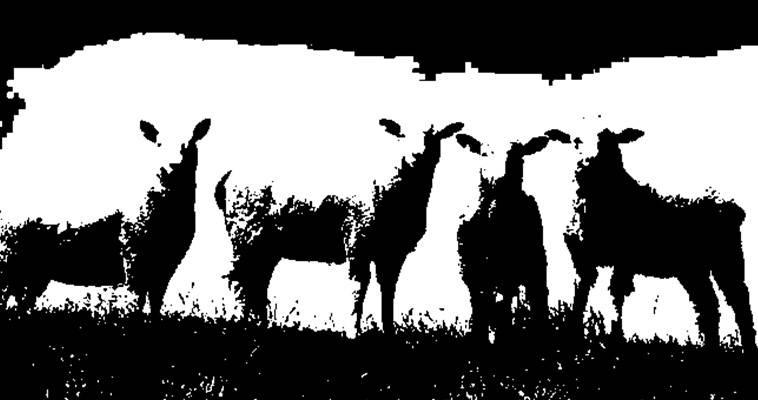 """""""Πρόβατα"""" με πολλά ανθρώπινα δικαιώματα, Γιάννης Παπαμιχαήλ"""